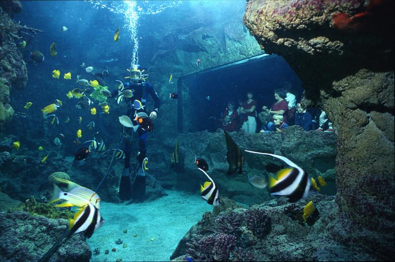 Aquarium de Brest Océanopolis avec pingouin