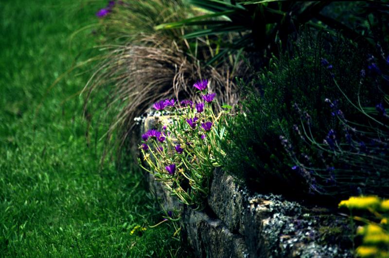 Rocaille et fleurs dans le parc de la maison d'hôtes en Finistère