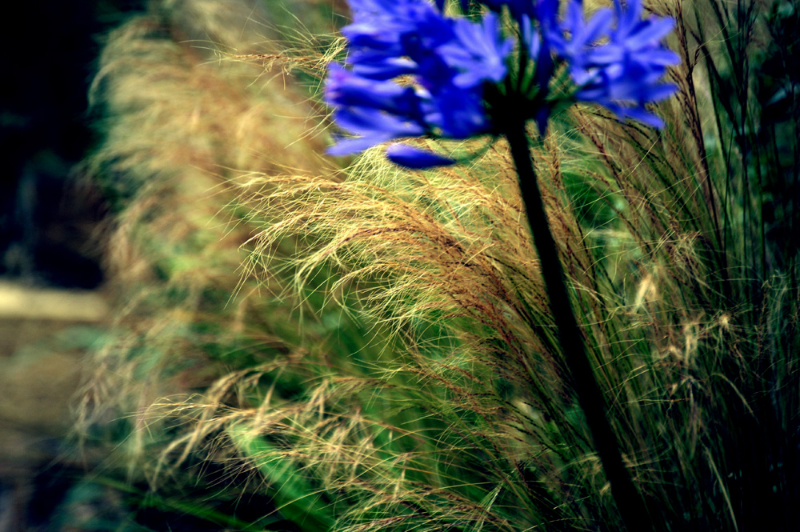 Fleurs de la presqu'ile de Crozon et des monts d'Arrée