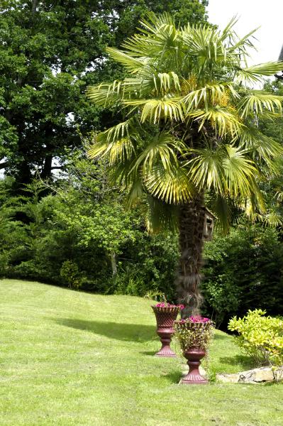 Palmier et vasques pour jardin d'hôte en Finistère