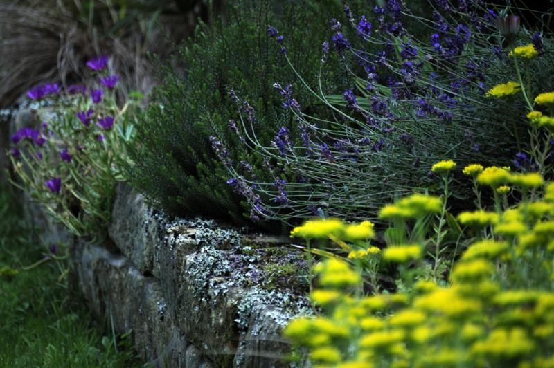 Rocaille et fleurs pour jardin d'hôtes Bretagne France