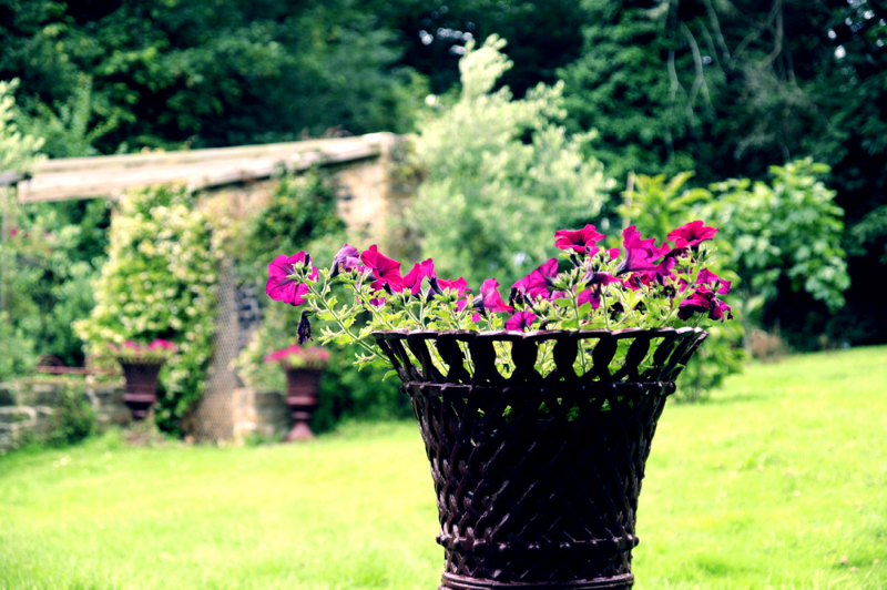 Vasques en fonte avec fleurs en Bretagne