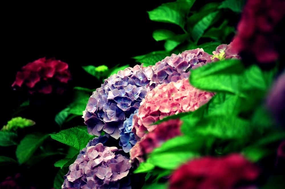 Les fleurs du parc de la maison d'hôtes de charme en Finistère