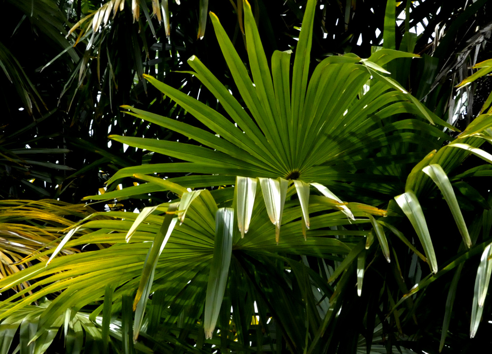 Proche de la mer les palmiers de nos chambres d'hôtes en Bretagne