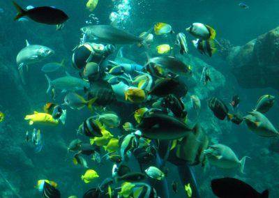 aquarium-oceanopolis-brest-requin-finistere