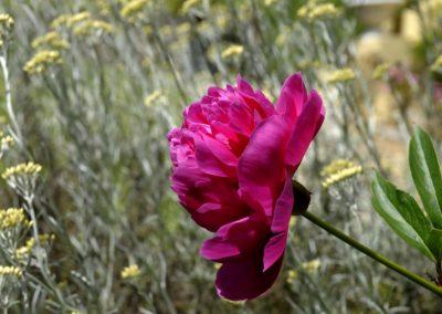 fleur-chambre-hotes-charme-france-bretagne