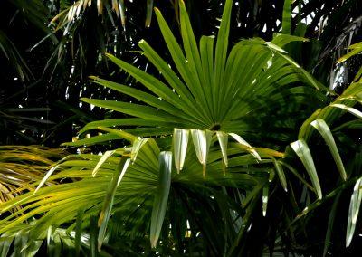 palmiers-proche-bord-mer-hotel-bretagne